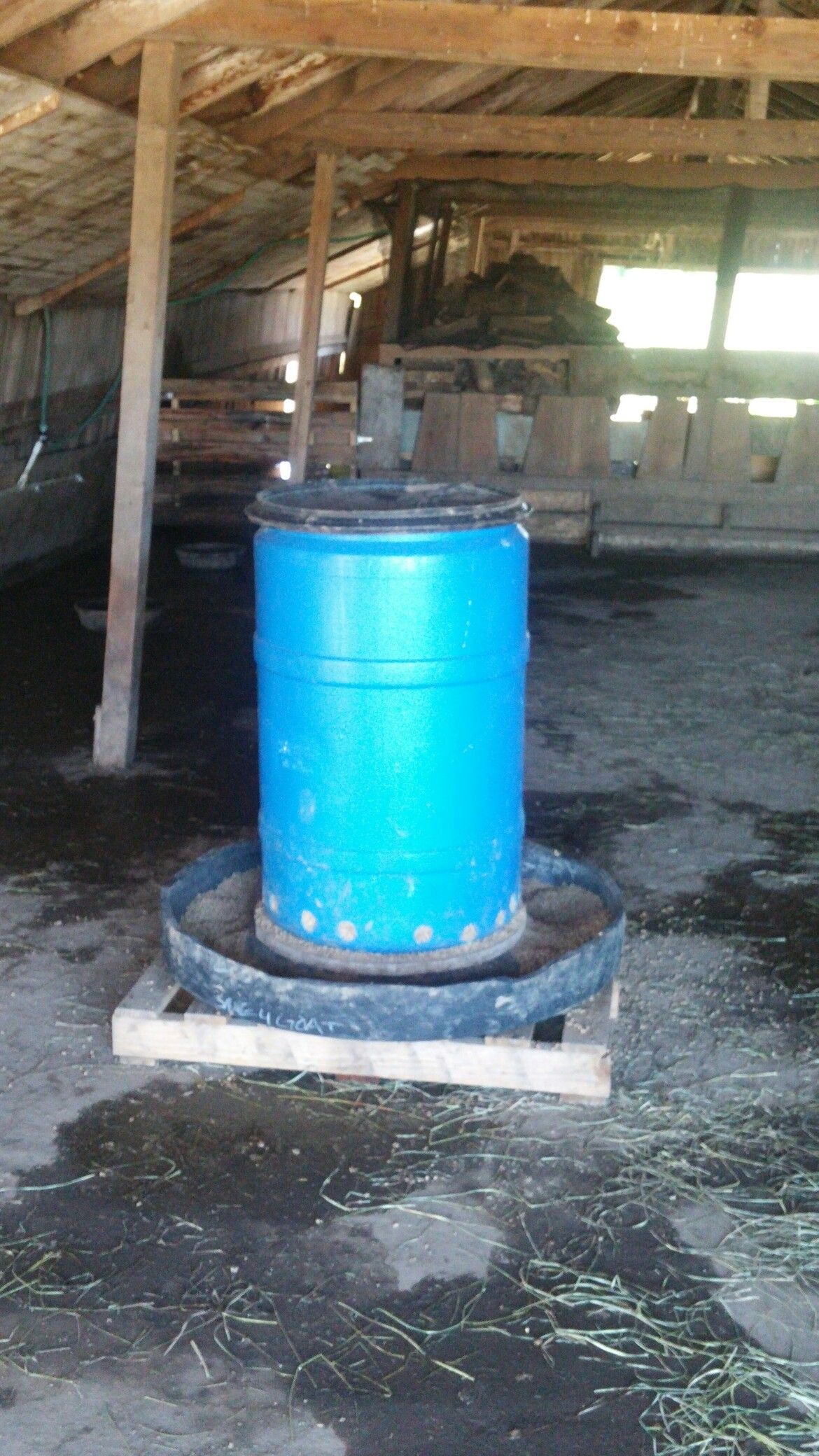 Automatic Pig Feeder 55 Gallon Barrel And Half Of A Semi Truck Tire Pig Farming Pig Feeder Pig