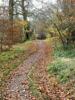 vwcampervan-aldridge:  Footpath at Park Lime Pits, Aldridge, Walsall, England.