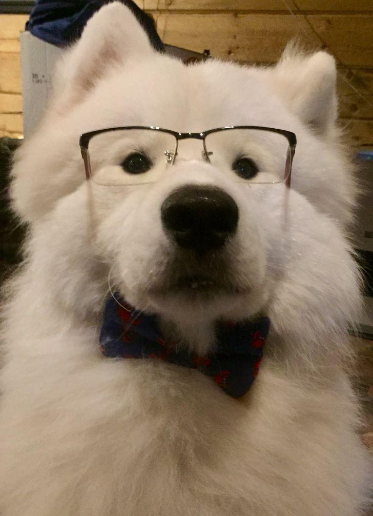 Shoob in glasses - Album on Imgur