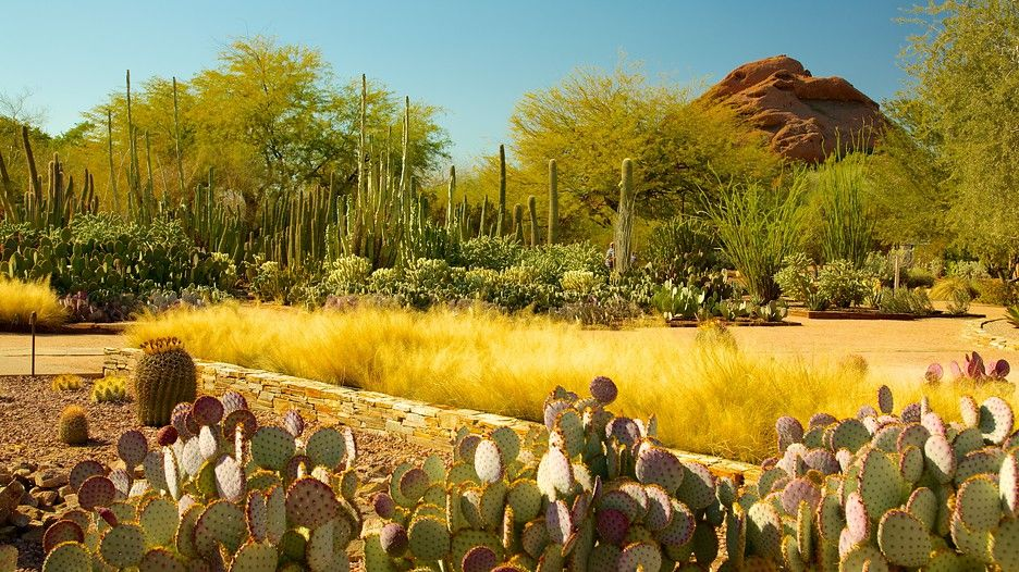 Desert Botanical Garden In Phoenix, Arizona | Expedia