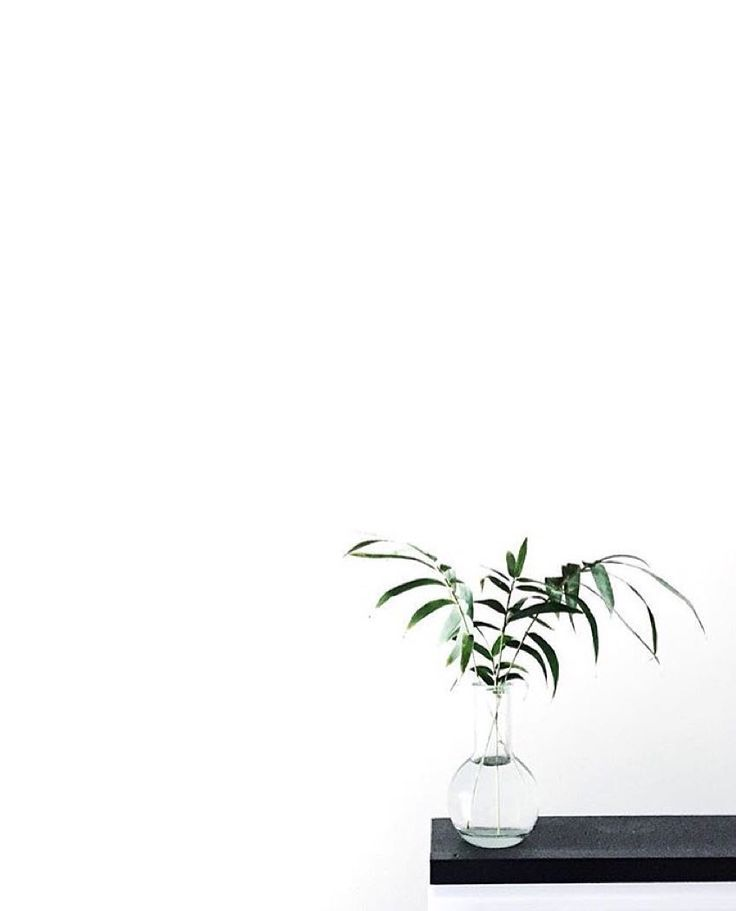 white minimalism inspiration pinned by @birambi_ | Plant ...