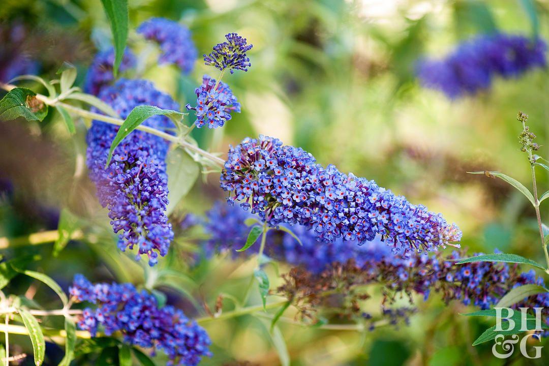 19 Power Perennials That Thrive No Matter What Plants Perennials Diy Herb Garden