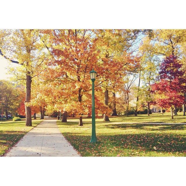 Beautiful walk through campus #fall #iu #indiana #bloomington