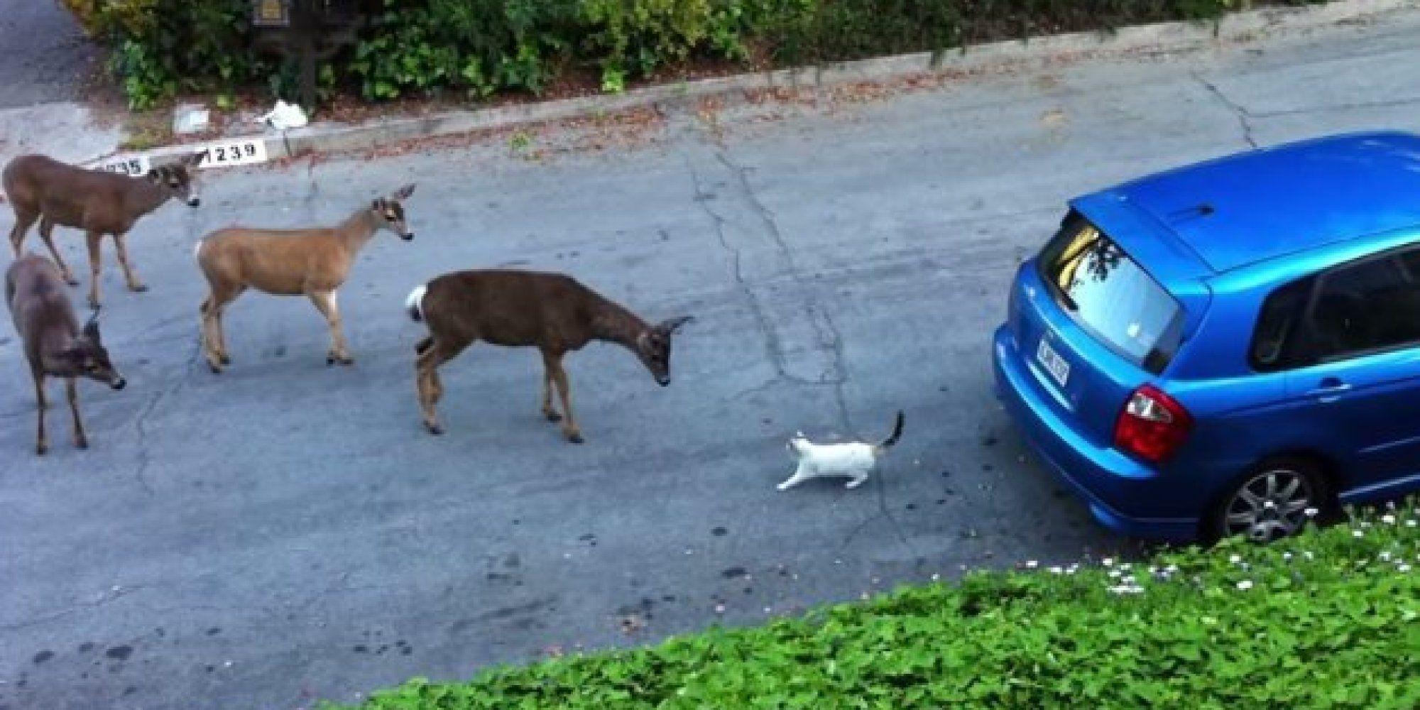 Herd Of Deer Encounters Strange New Creature Called Cat With
