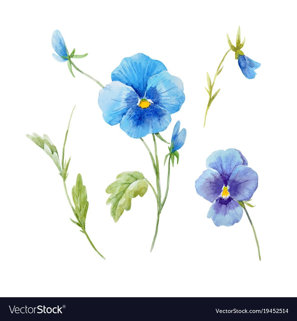 Watercolor Pansy Flower Set Vector Image On Vectorstock Pansies Flowers Flower Drawing Pansies