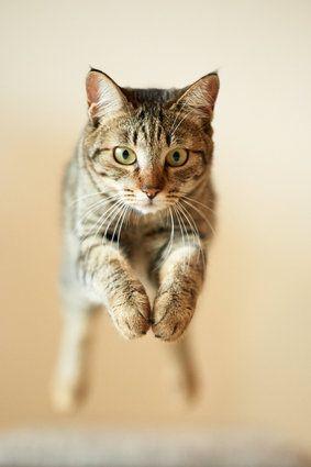 Flying cat from Neko 15