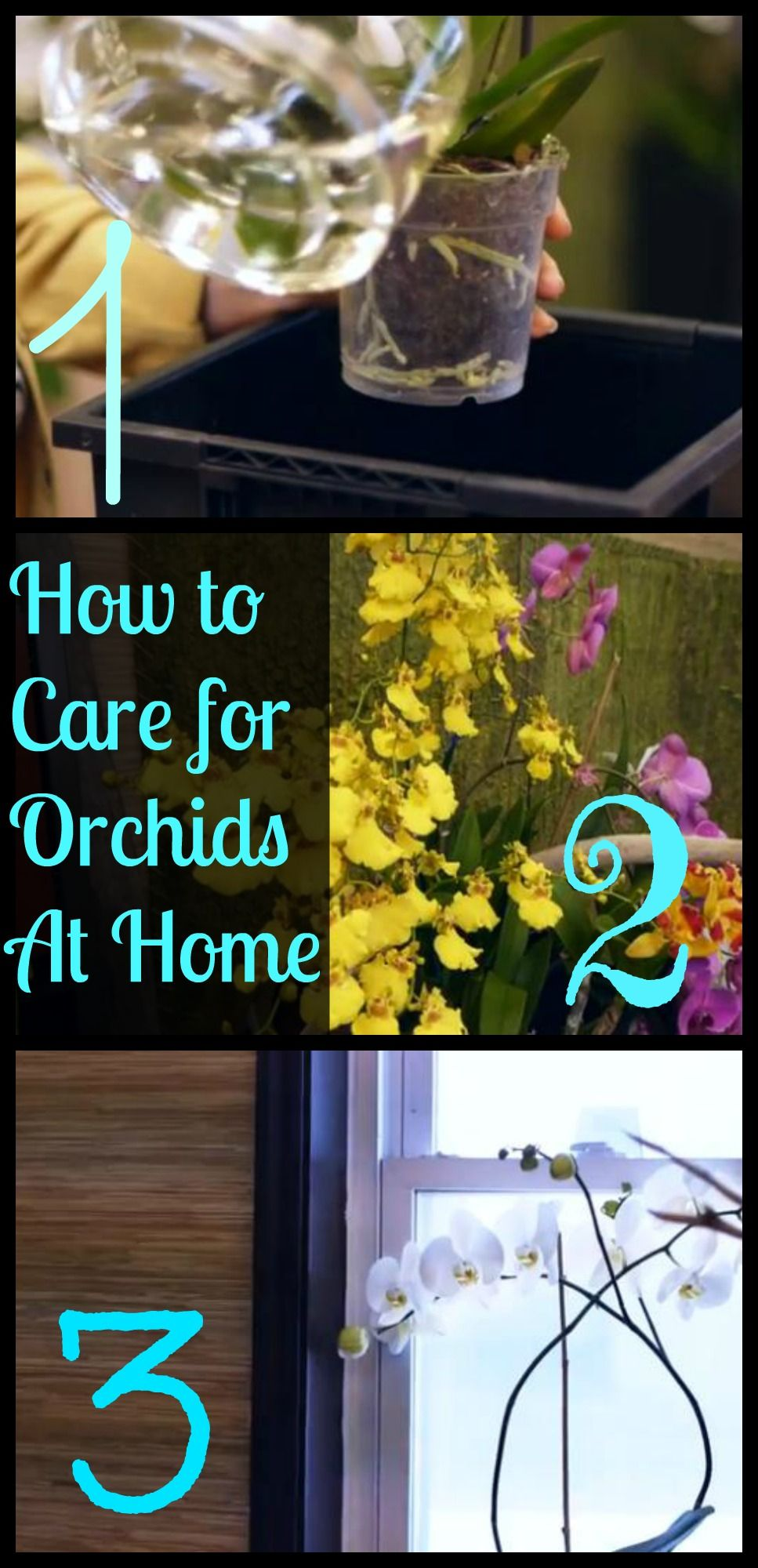 Photo of How to Care for Orchids at Home