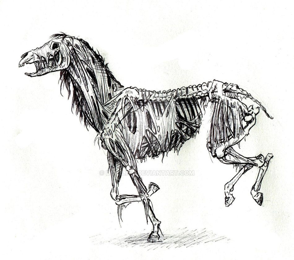 Zombie Horse sketch by...