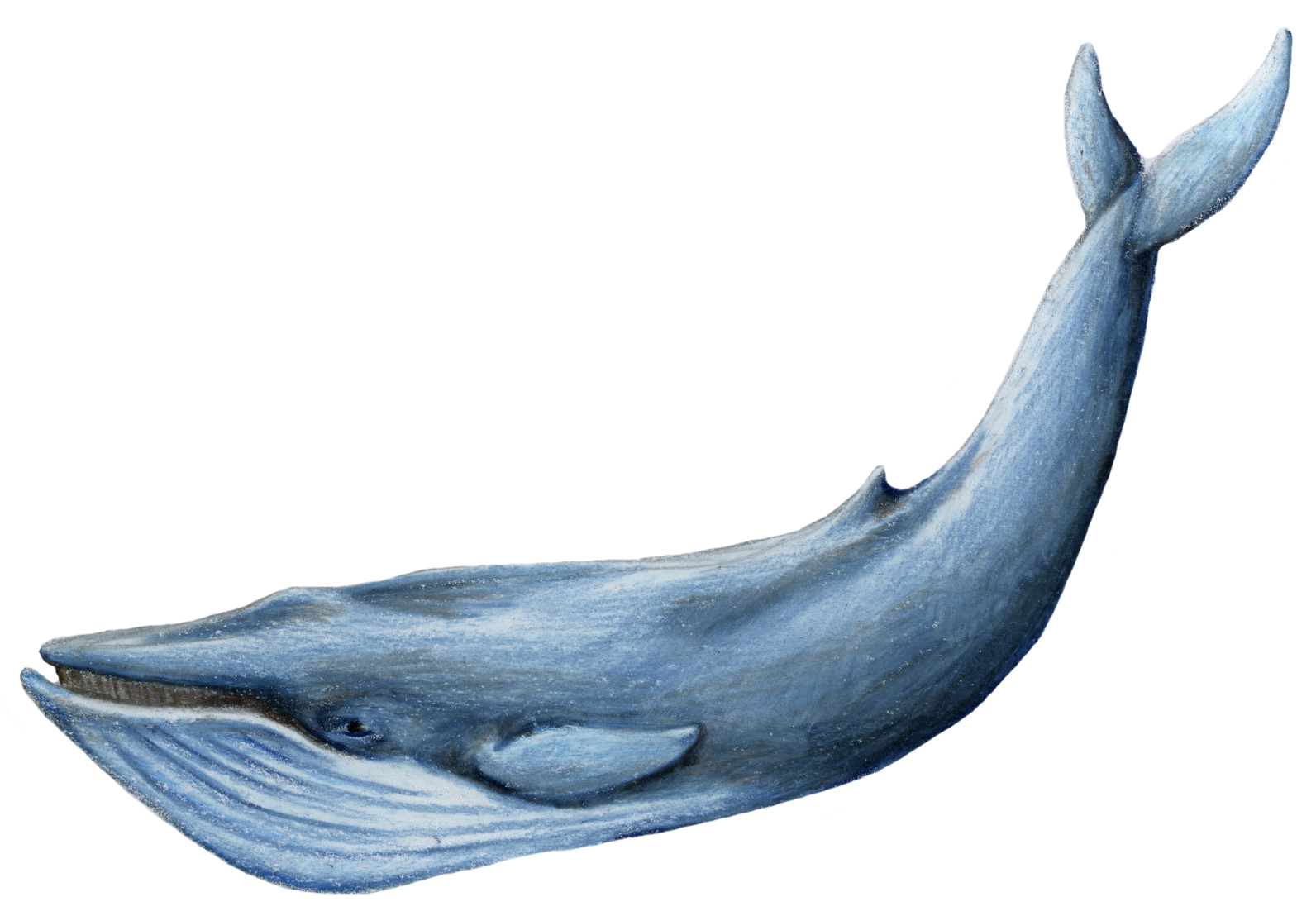Kit 21 Tys Izobrazhenij Najdeno V Yandeks Kartinkah Whale Blue Whale Whale Pictures