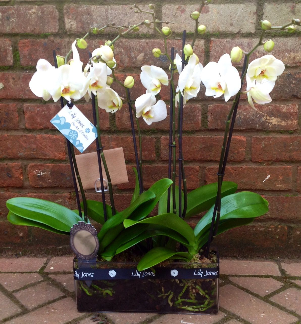 Orchid Gift Idea Orchids Flowers Gifts