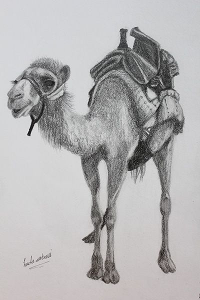Camel - pencil   Sketches, My drawings, Art