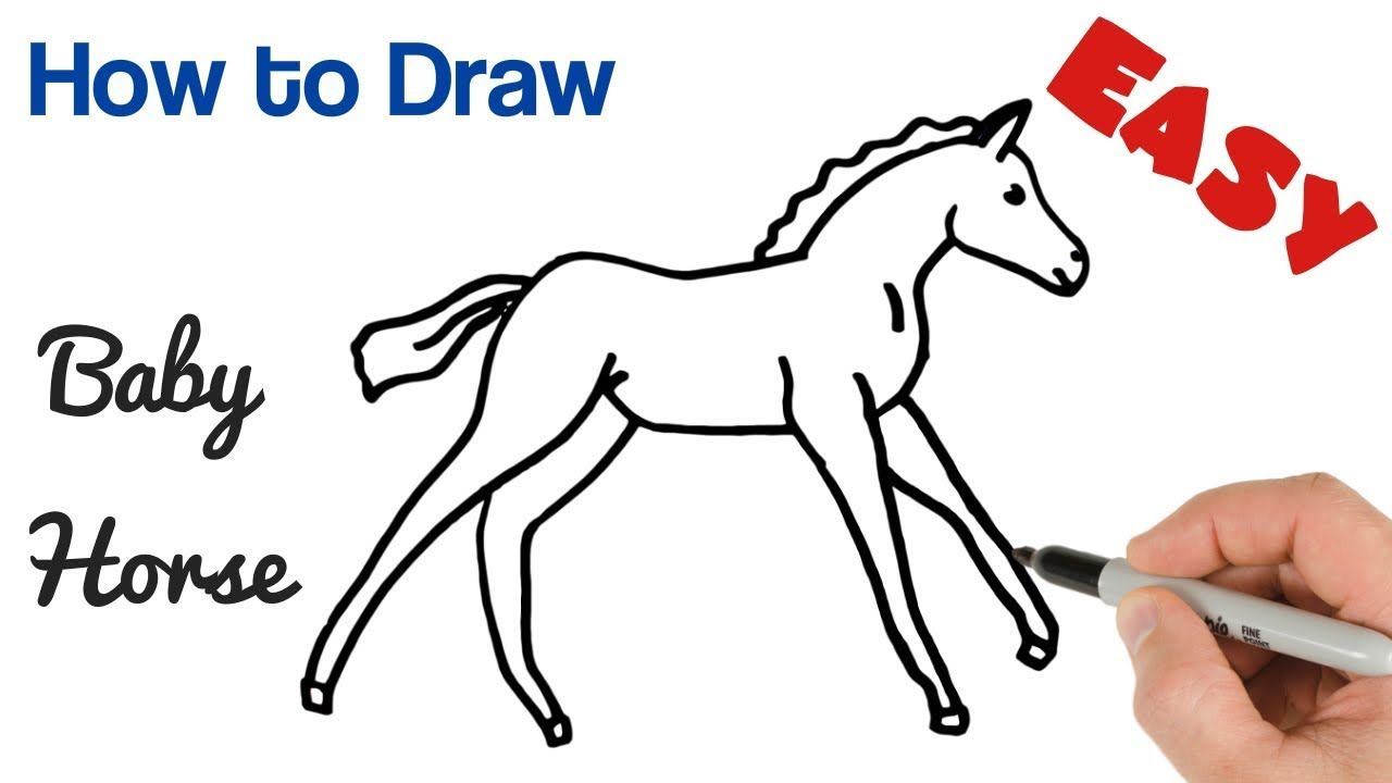 How To Draw Baby Horse Foal Easy Baby Animals Art Drawing
