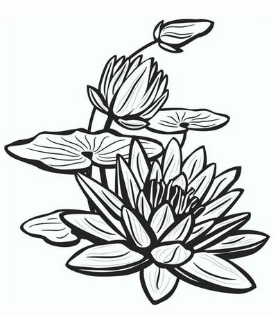Pin Oleh Agung Di Lukisan Bunga Sketsa Bunga Tato Bunga Teratai Lukisan Bunga