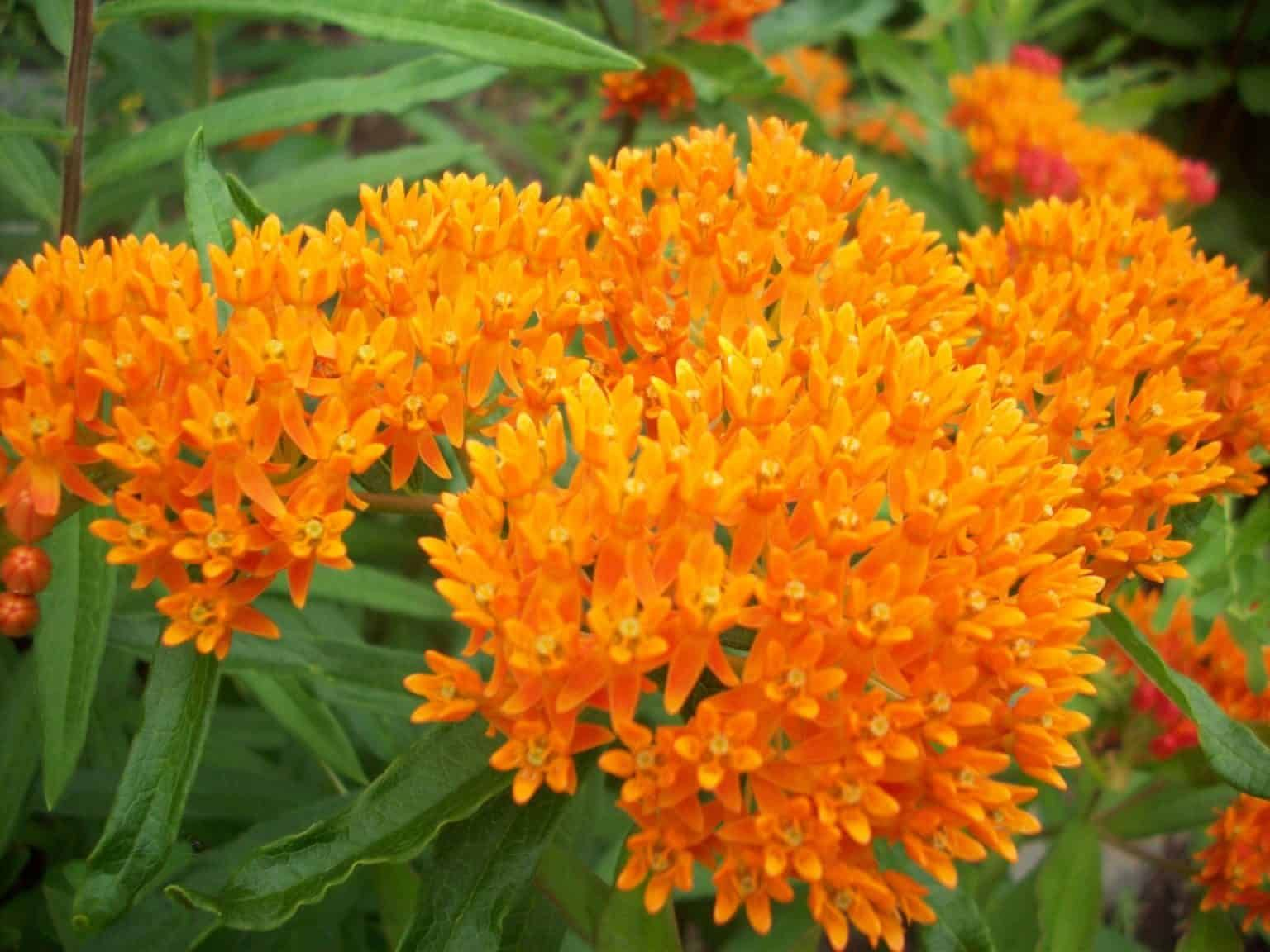 14 Incredible Plants for Bees and Pollinators