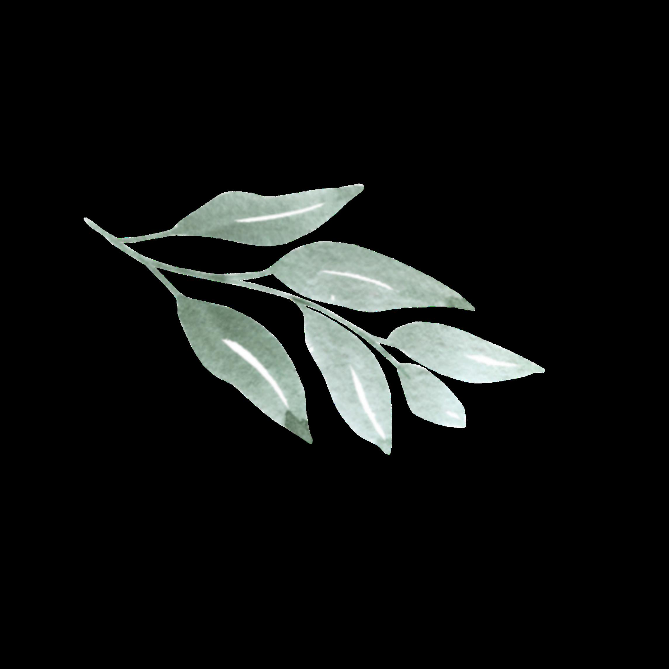 Freetoedit Leaves Tropical Aesthetic Plants Doodle Vintage Palmtree Remixit Plant Aesthetic Image Stickers Plants