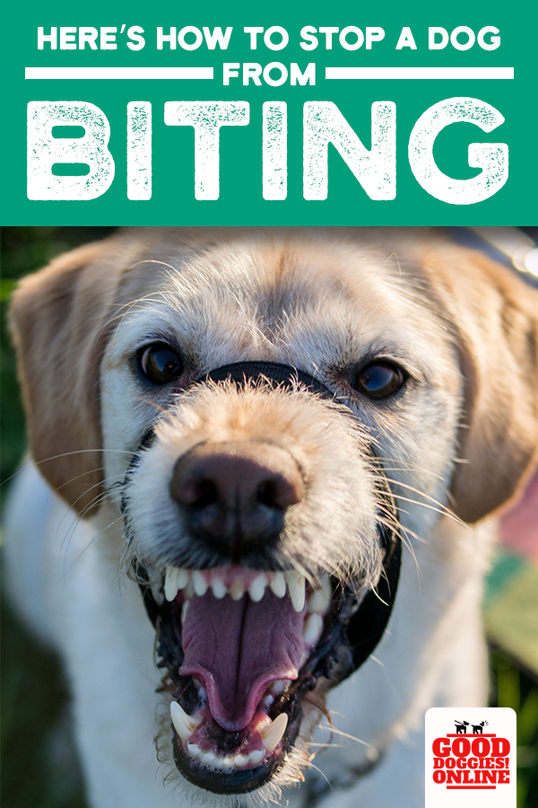 Complete Guide on How to Stop a Dog From Biting Dog