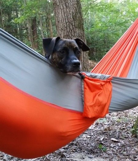 pictures tell our tails jordan lake nc road trip with our dog pet friendly travel blog. Black Bedroom Furniture Sets. Home Design Ideas