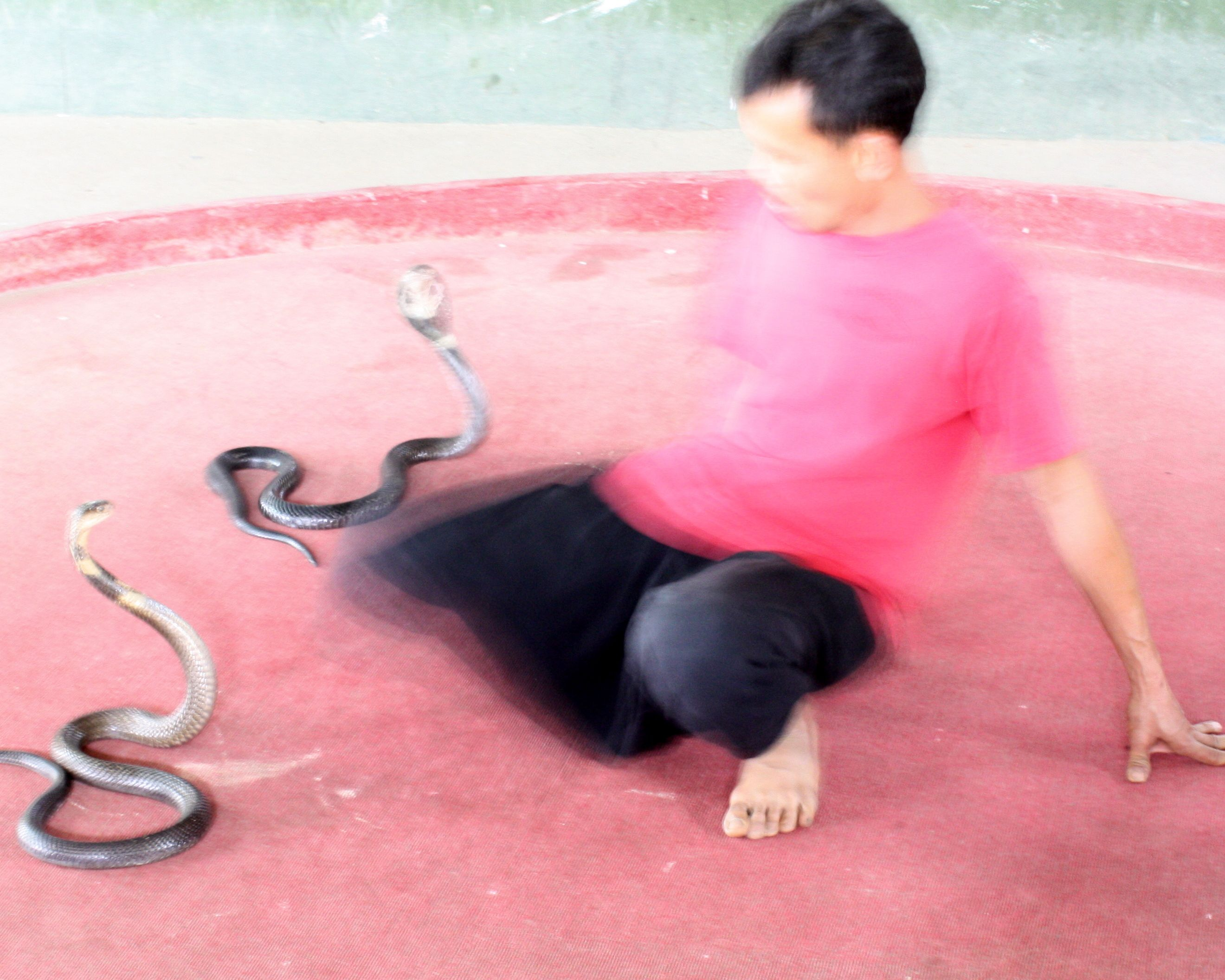 Dance with #snakes