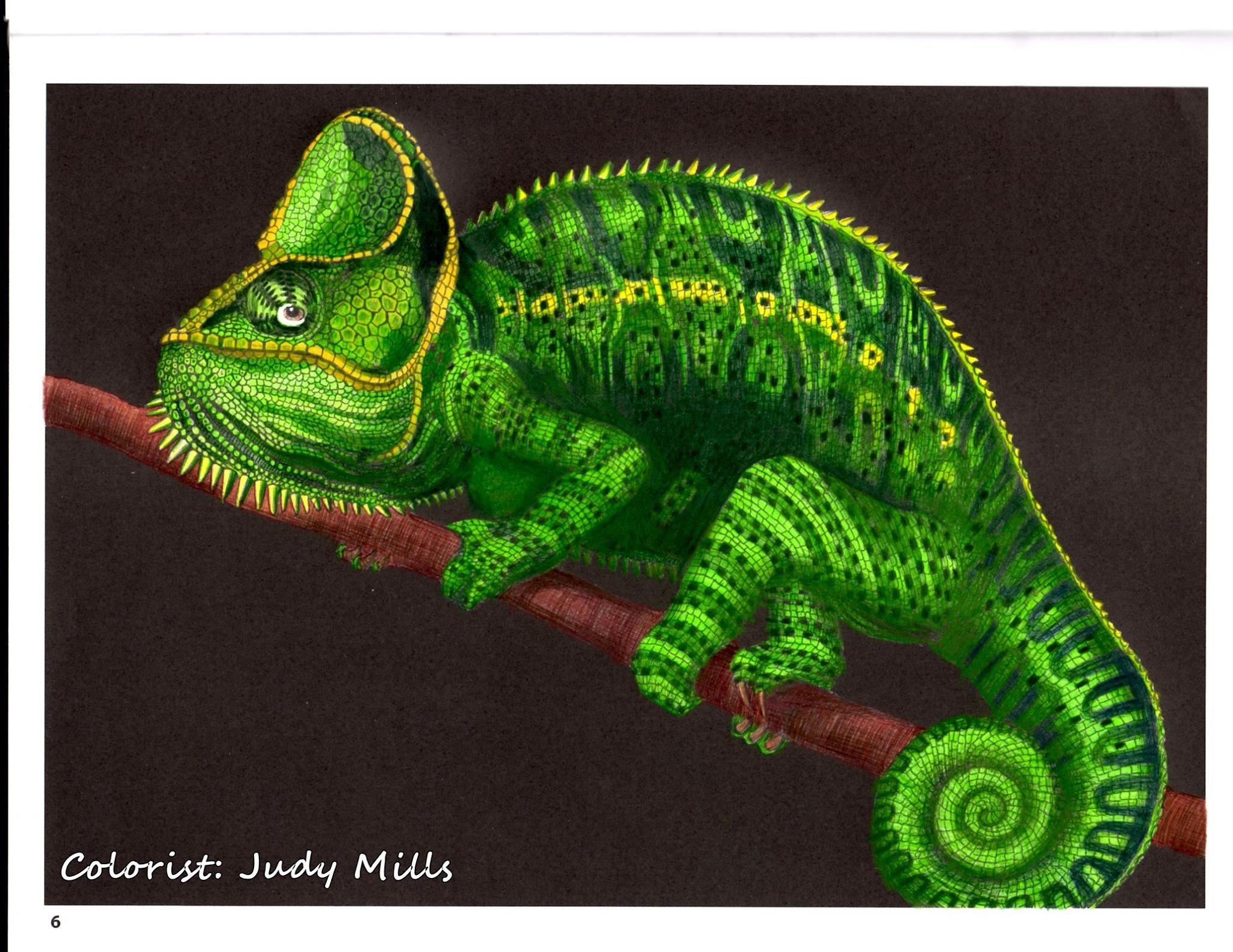 Chameleon 1 by Judy M.   Chameleons/Lizards/Dragons   Pinterest