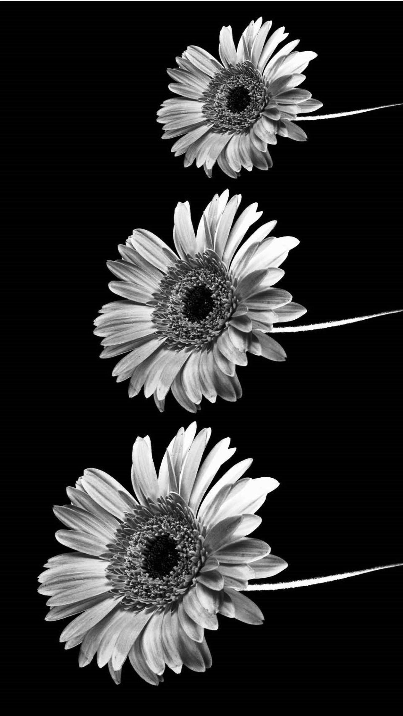 Black And White Iphone Wallpapers Tumblr Black And White Wallpaper Iphone Tumblr Iphone Wallpaper Tumblr Wallpaper