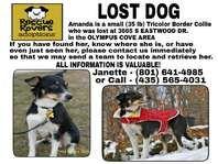 LOST DOG - Small Tricolor Border Collie - Lost and Found