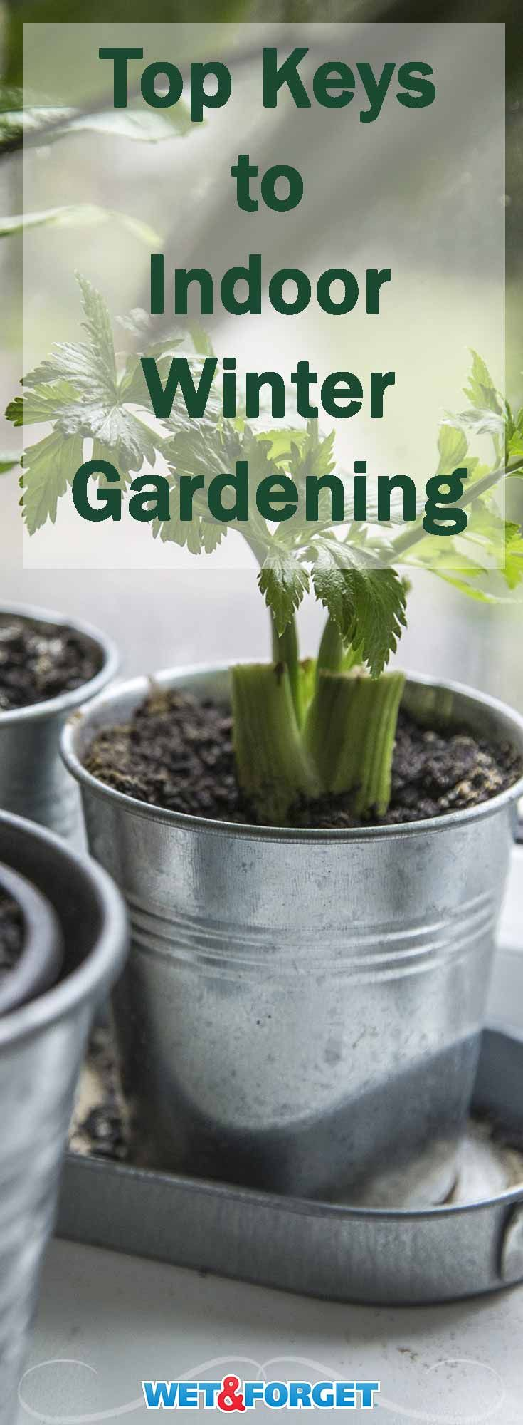 From houseplants to veggies the 5 keys to indoor winter gardening from houseplants to veggies the 5 keys to indoor winter gardening weather key and gardens workwithnaturefo