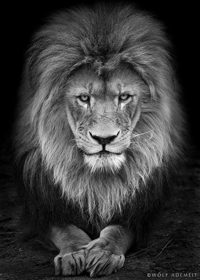 Half man half lion face