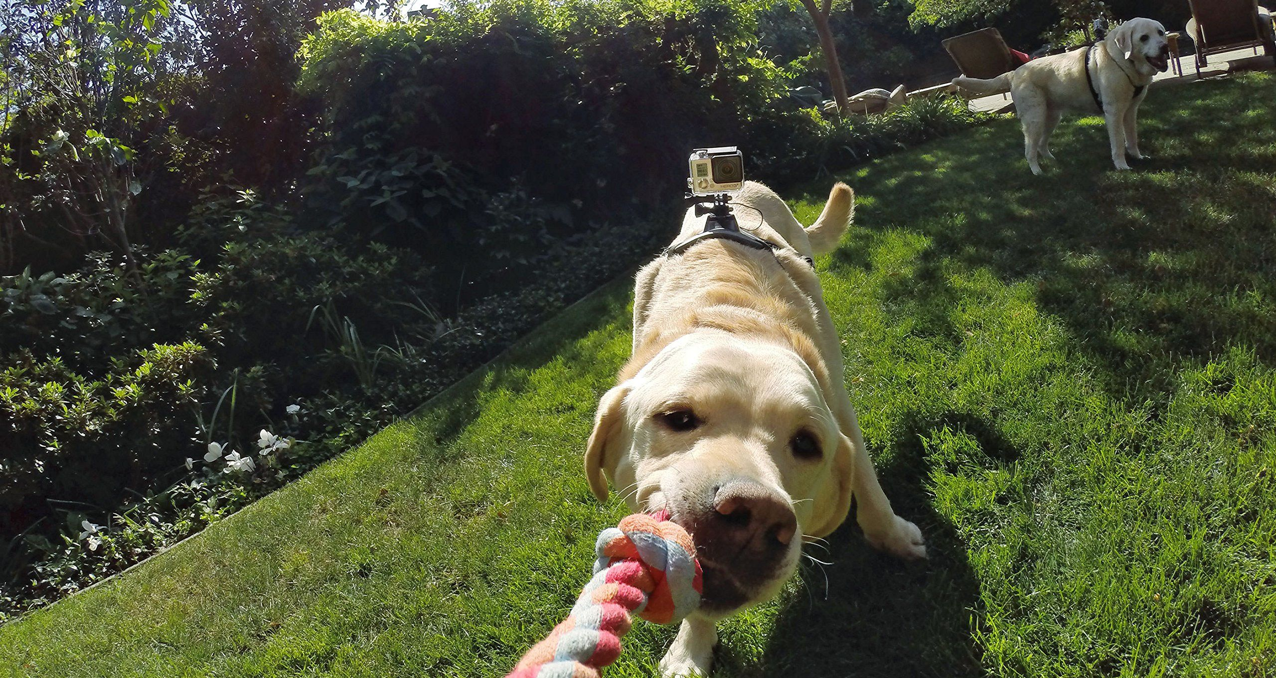 Gopro Fetch Dog Harness Gopro Official Mount Dog Fetch