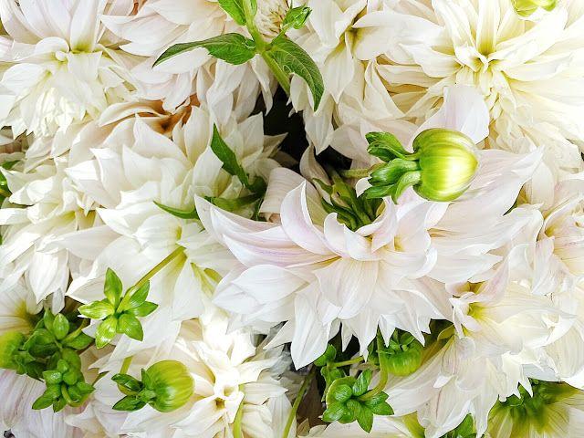 Auf der Mammilade|n-Seite des Lebens: A September to remember | Ein sonniges Hoch auf den Herbsthochsommer. Außerdem: Das Kürbispommes-Experiment und die wirklich besten Tipps daraus, Dahlien, Café au Lait Dahlien