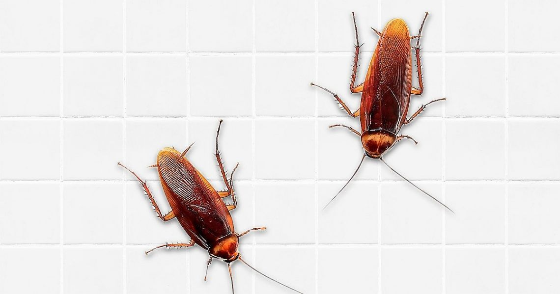 how to get rid of german roaches in car
