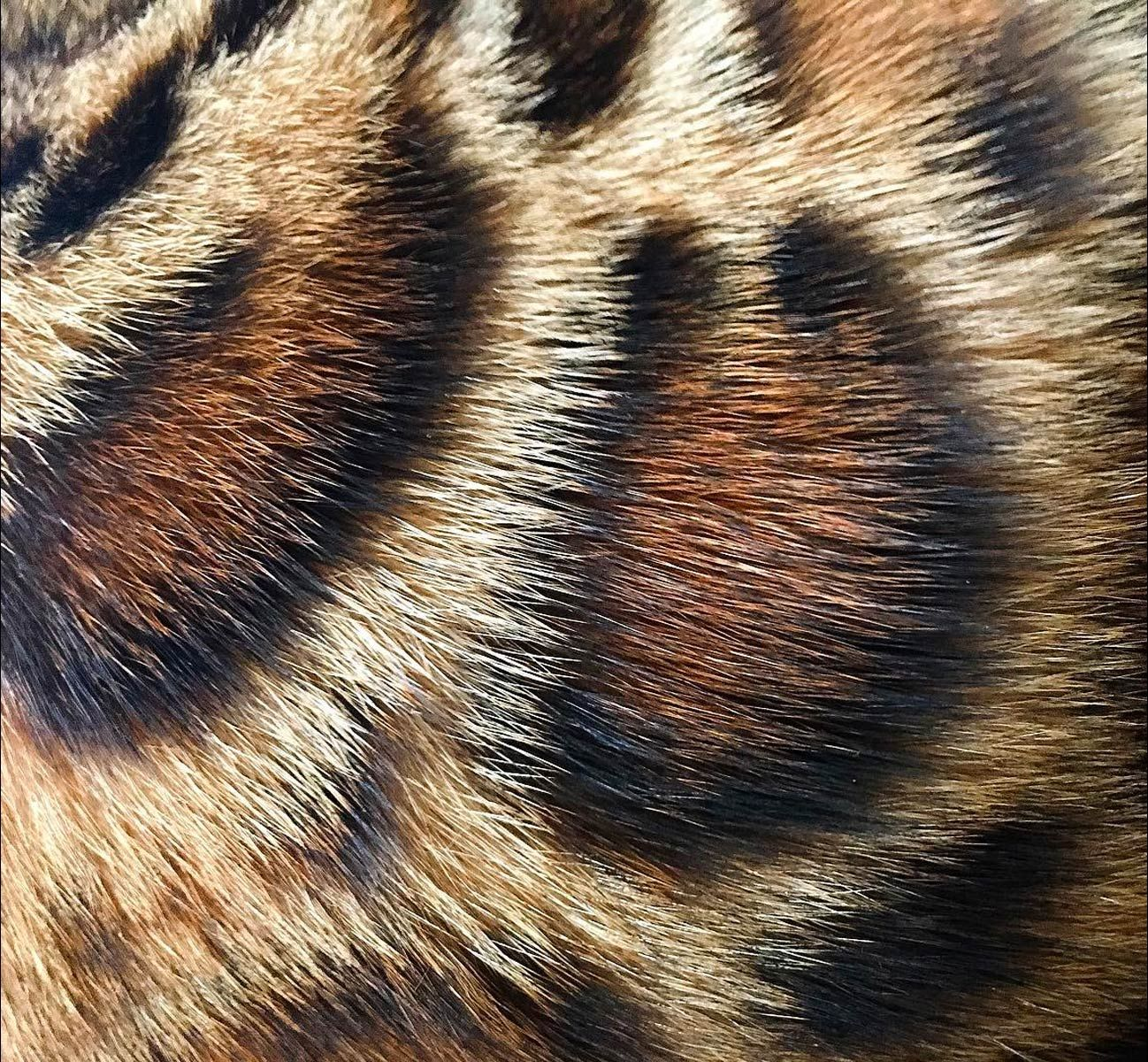 fur Google Search Cat colors, Bengal cat names, Bengal
