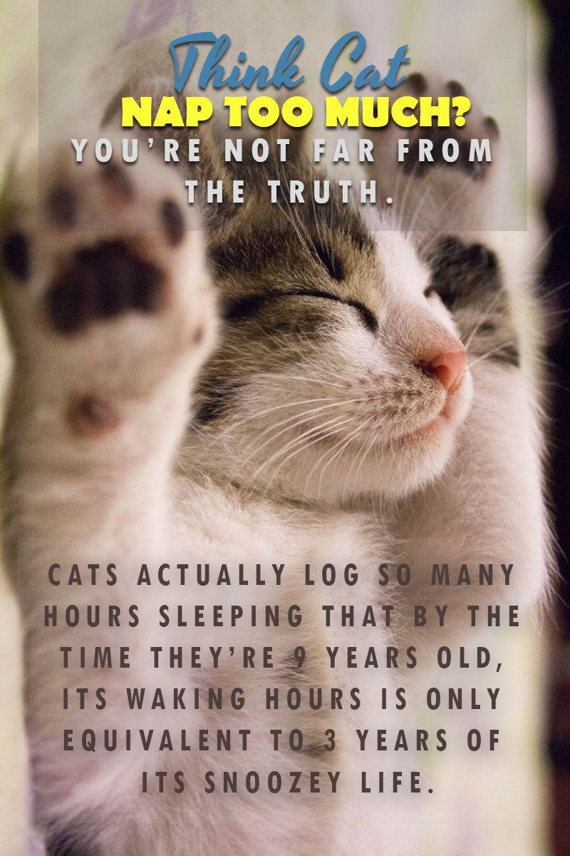 How many hours do cats sleep everydaycatskittenscat