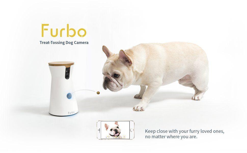 Amazon Com Furbo Dog Camera Hd Wifi Cam 2 Way Audio And Treat Tossing Tomofun Llc Pet Supplies Dog Activities Smart Dog Your Pet