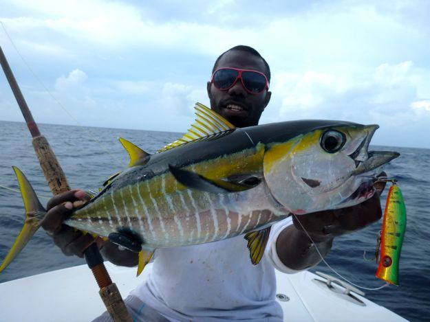 Yellowfin on Poppers | Fish I would like to catch | Pinterest ...