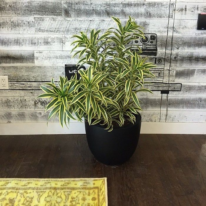 The best indoor plants from The Sill Indoor plants