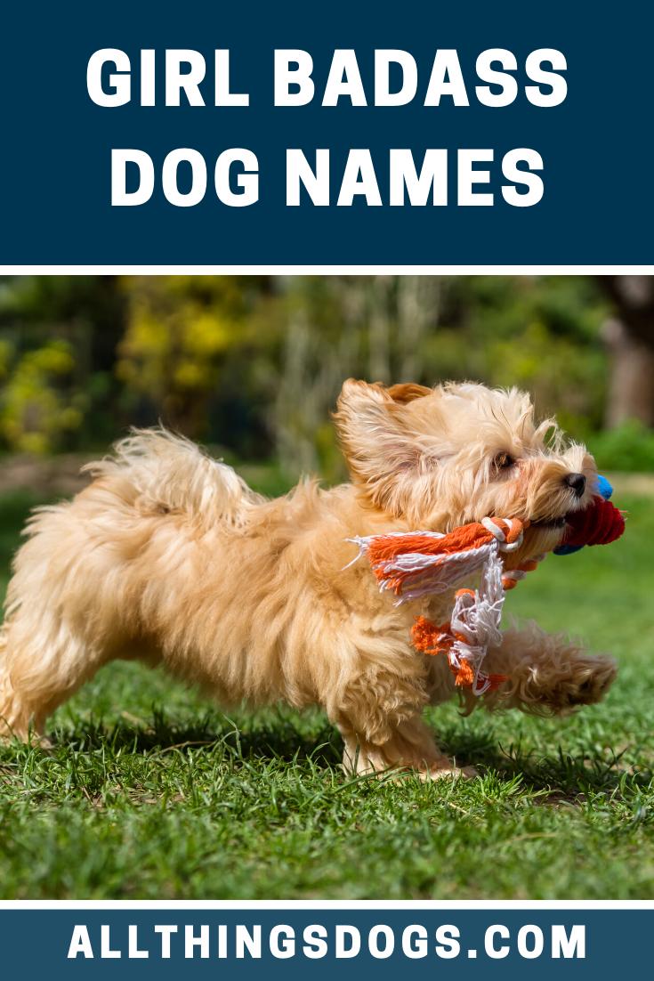 Girl Badass Dog Names Girl Dog Names Cute Girl Dog Names Dog Names