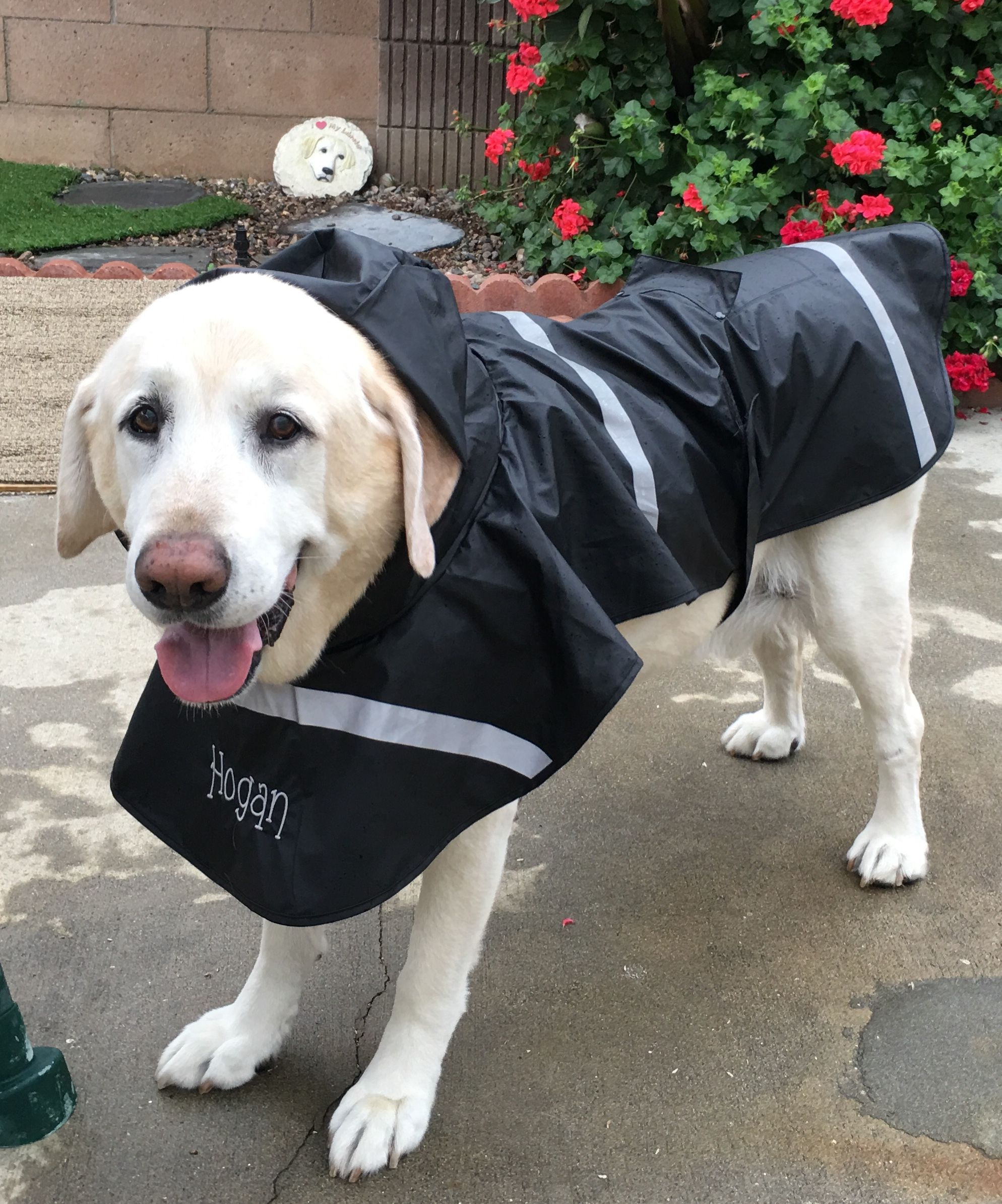 Showing Off My New Rain Coat Finally Found Xxl That Keep My
