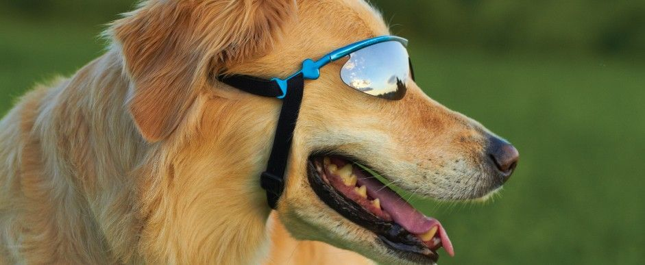 Glasses For Dogs Yes You Can Have Them Go Get An Eye