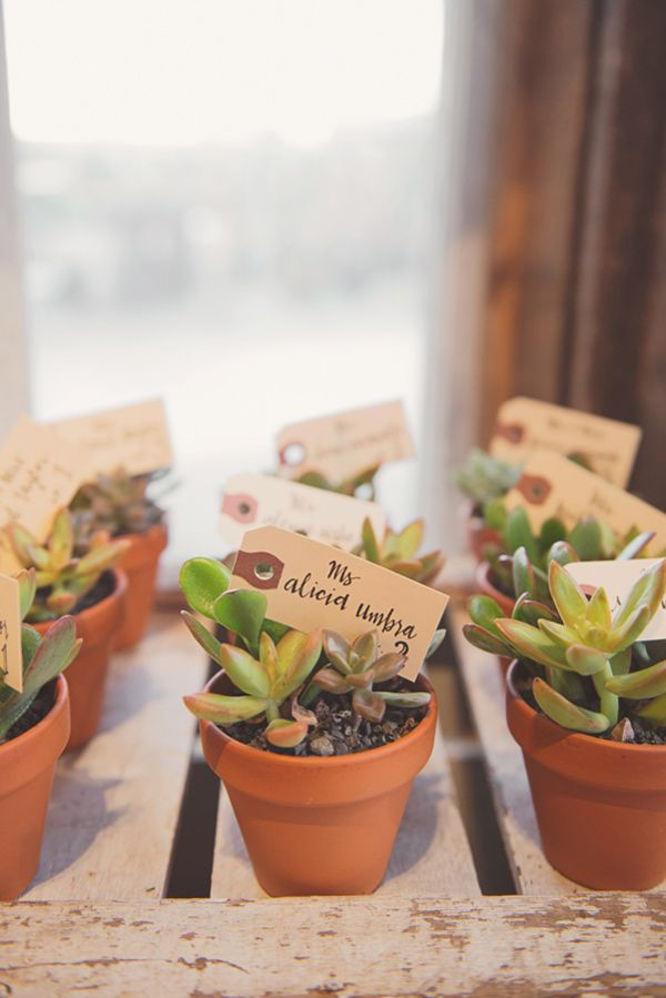 succulent escort cards - photo by Maria Mack Photography http://ruffledblog.com/a-picturesque-greenhouse-wedding-at-terrain #seatingchart #escortcards #weddingideas