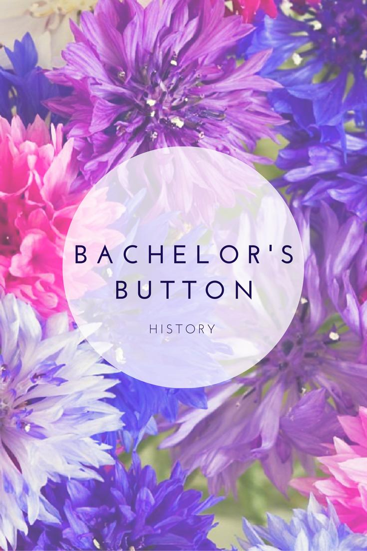 Bachelor S Button Plant History Bachelor Buttons Bachelor Button Flowers Heirlooms Flowers