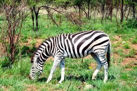 wild animals that amaze - Google Search