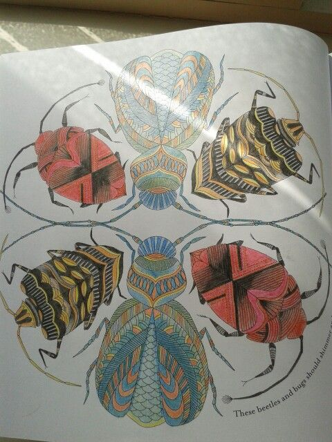 Millie Marotta Animal Kingdom Beetles and Bugs Animal Kingdom