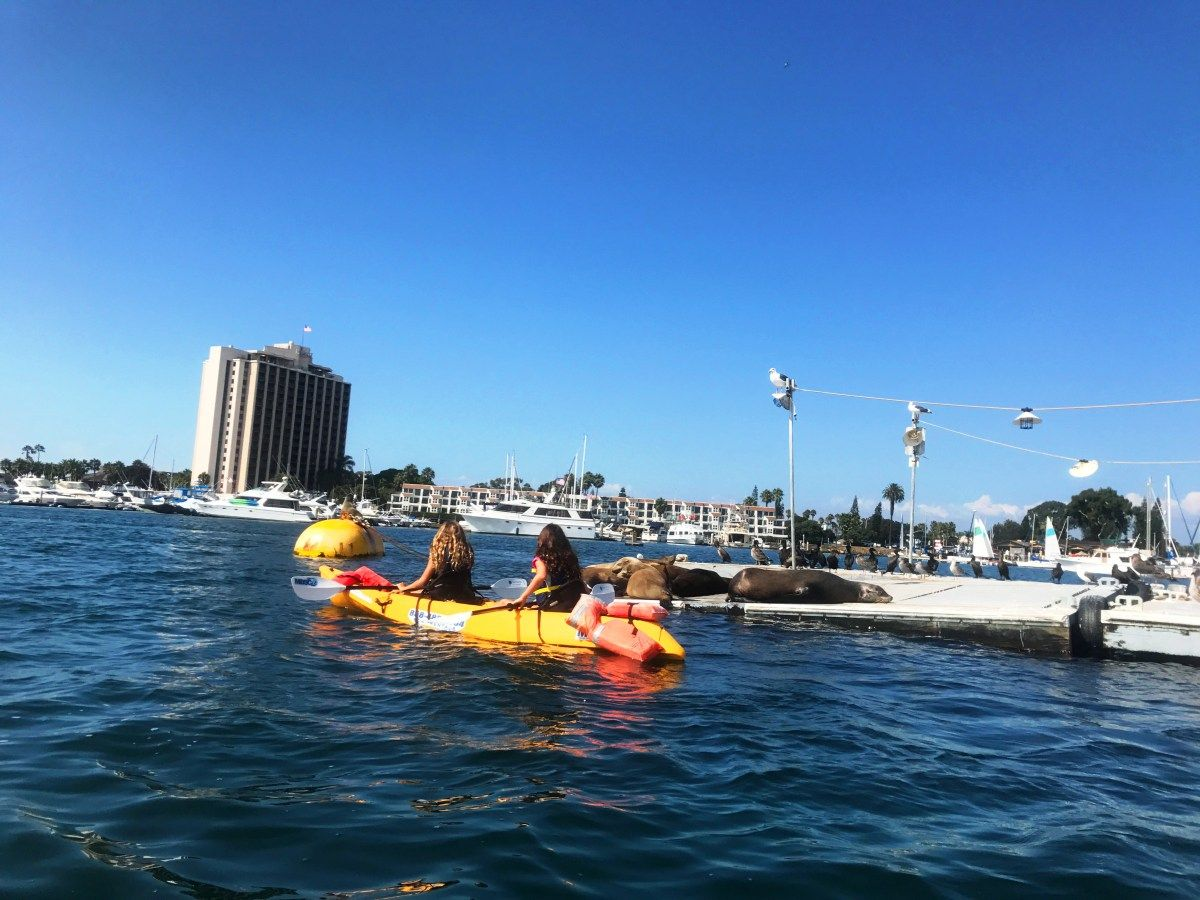 Kayak or SUP on Mission Bay with Sea Lions Mission bay