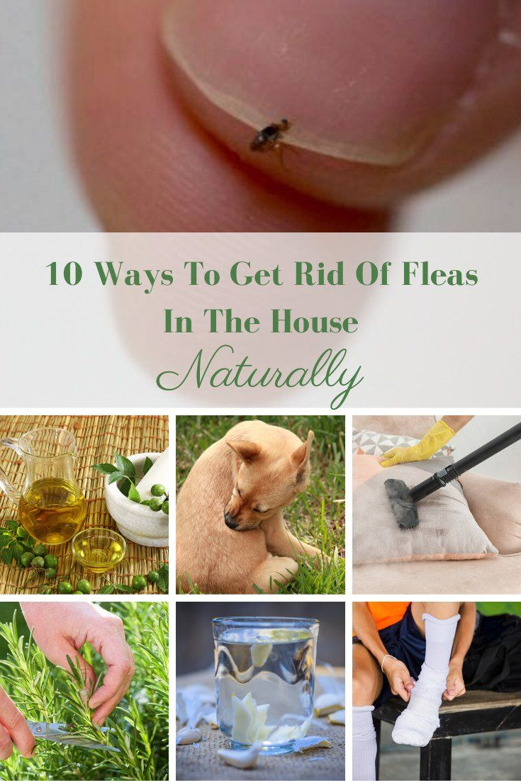 10 Ways To Get Rid Of Fleas In The House Naturally -   18 how to get rid of fleas in house ideas
