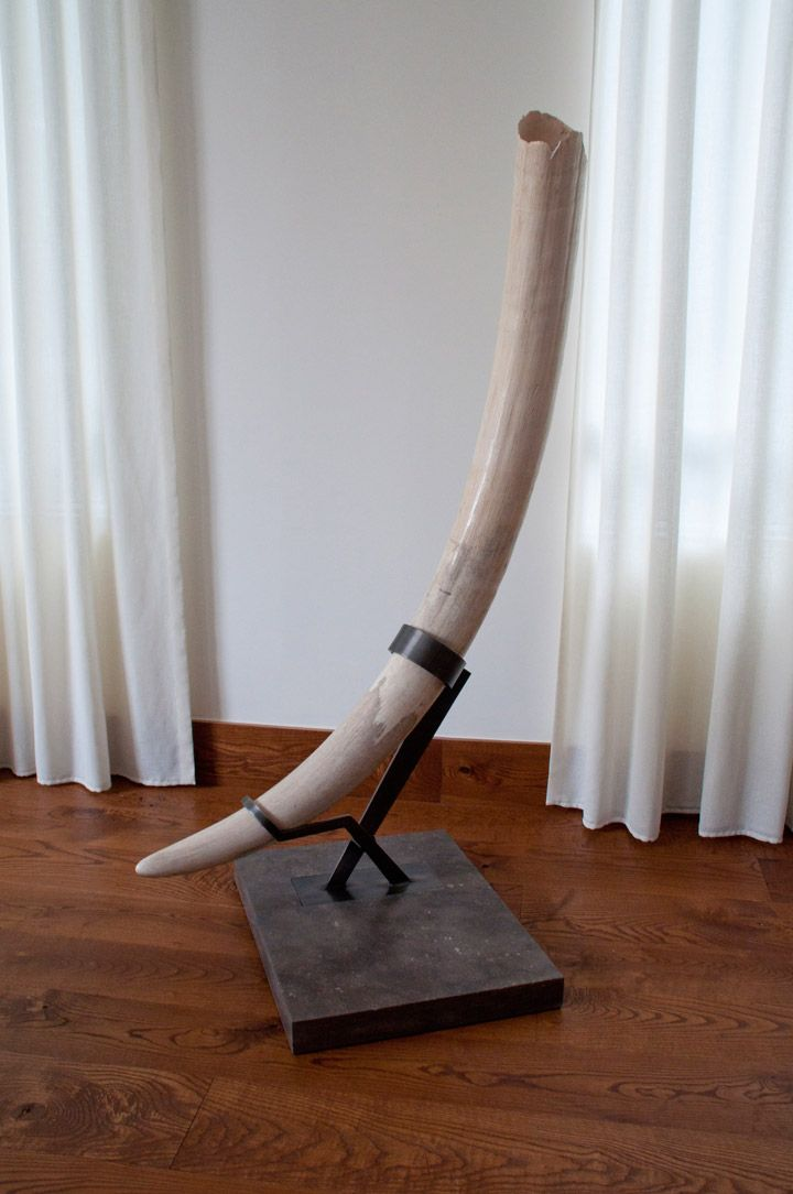 A custom display stand for a fragile 70-pound heirloom elephant tusk. The upper portion of the tusk is very fragile where the ivory forms a three foot cavity. Two custom-fitted steel arms work together to stabilize the tusk in a neutral position without putting pressure on its weaker points.