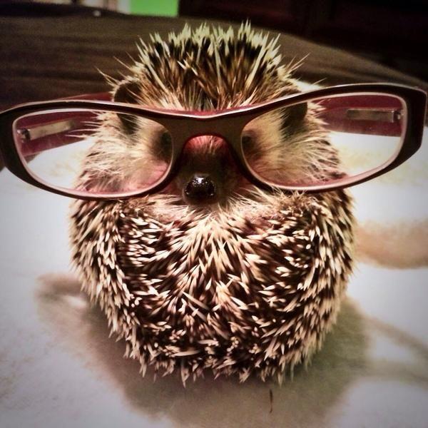 Reggie the Hedgehog (@GronkReggie)   Twitter