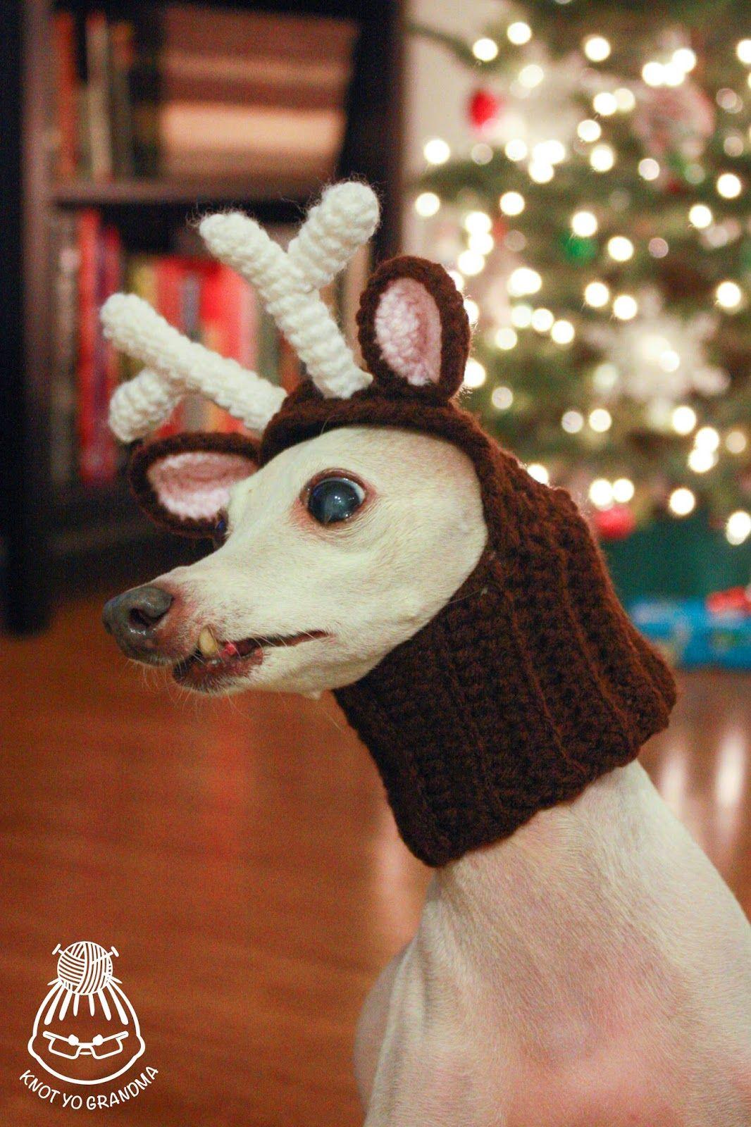 Knot Yo Grandma Diy Crocheted Reindeer Dog Headdress Crochet Dog Clothes Reindeer Dog Crochet Dog Sweater