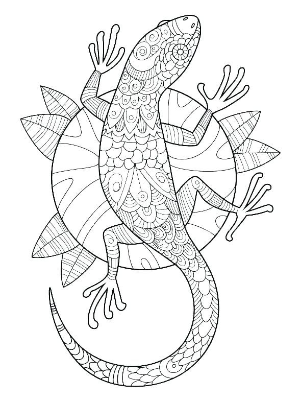 Gecko Coloring Pages Best Coloring Pages For Kids Mandala Coloring Pages Coloring Books Antistress Coloring