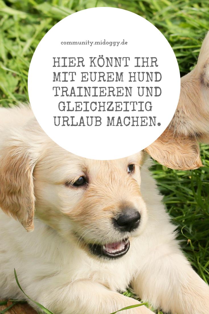 Wo Lohnt Sich Der Urlaub Mit Hund Hundetraining Und Urlaub In Der