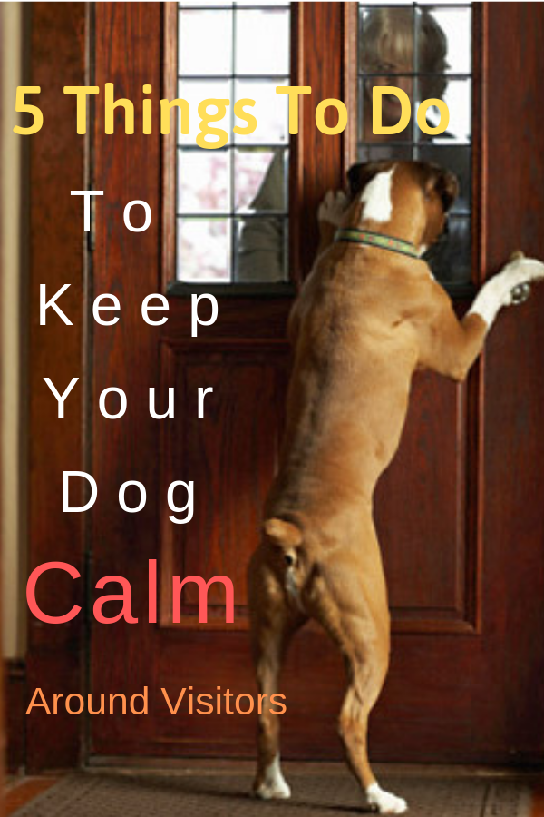 Top 5 Things To Do To Keep Your Dog Calm Around Visitors